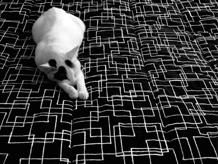 Photography Contest Grand Prize Winner - October 2003: White and Black,  Black and White