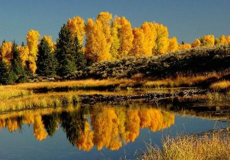 Cotton Woods Splendor