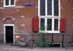 Tulips on Bike