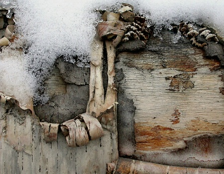 Old Wood. Old Snow