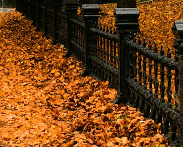 Leaves And Gate
