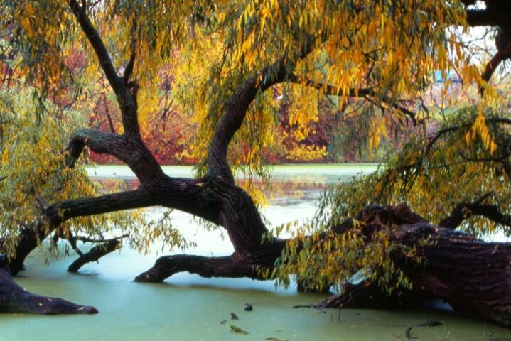 """""""Autumn Beauty"""""""