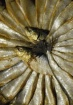 Sardine Wheel