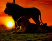 my safari