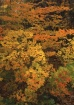 Fall Palette in b...