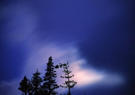 Sequoia Night