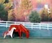 Origami Horses fo...