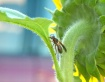 Stretching Wasp