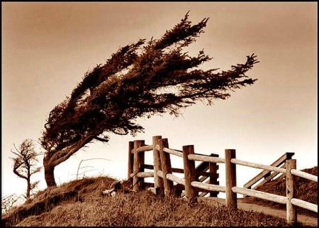 Sea Pine (a la Dr. Seuss)