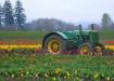 Tulip fields of W...