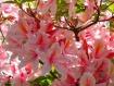 Spring burst of c...