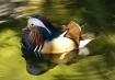 Mandrain Duck (Ma...