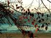 Fall on Lake Mich...