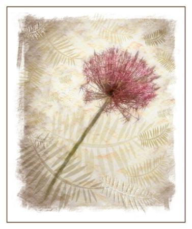 Allium fantasy