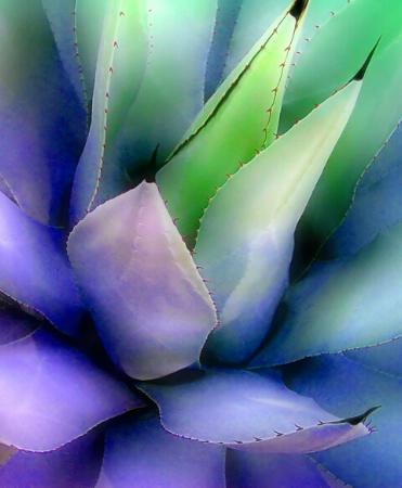 A Colorful Cactus