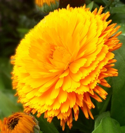 Macro Flower Images #1