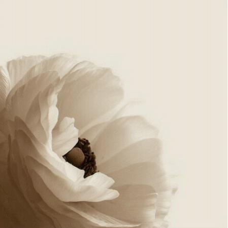 Single Flower in Sepia