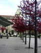 Braga - center
