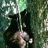 © Michael S. Couch PhotoID# 337828: Black Bear