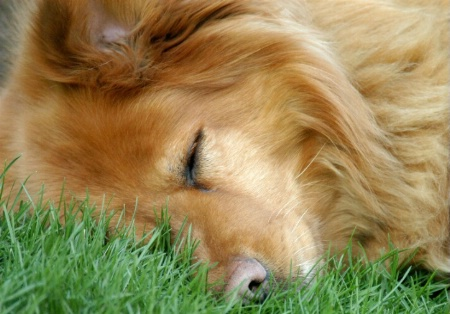 Let Sleeping Dogs...Sleep!