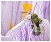 Spring Buzzer