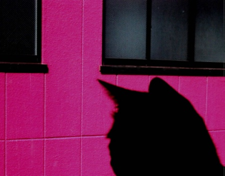 Godzilla's Cat Shadow