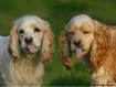 Peanut Butter Pup...