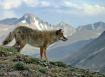 Alpine hunt