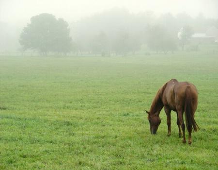 Horse in Foggy Field