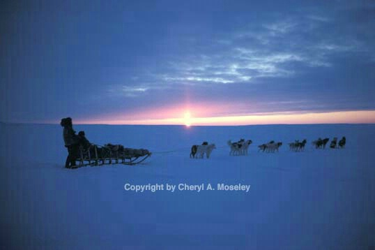 Dog Sledding with mid-day sun in February - ID: 355782 © Cheryl  A. Moseley