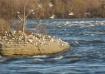 Seagull Gathering