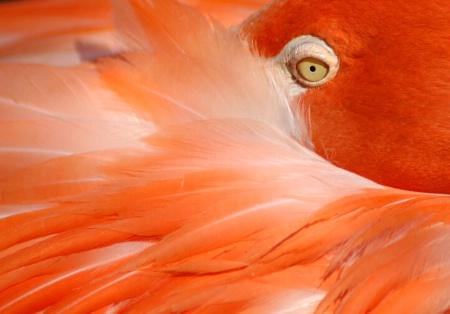 National Zoo Flamingo
