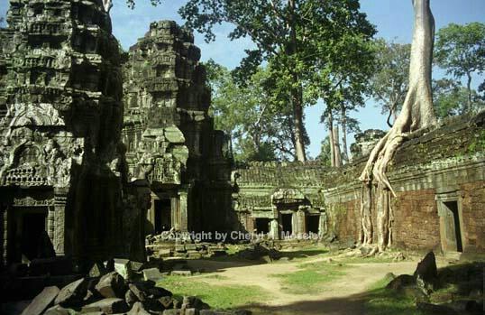 Creeping tree ancient ruins #1, Cambodia, 25- - ID: 362434 © Cheryl  A. Moseley