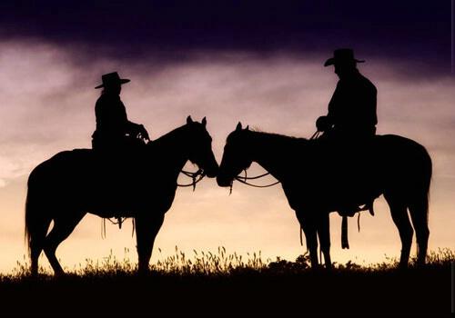 horses in silhouette