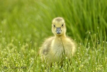"""""""Chickadee"""""""