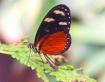 Butterfly - 2-