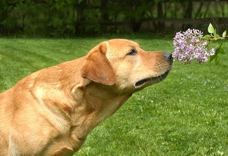 A Sniff of Springtime