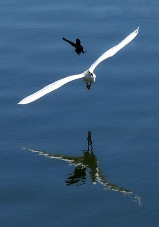 Bird Chasing