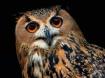 SIMPLY BIRD