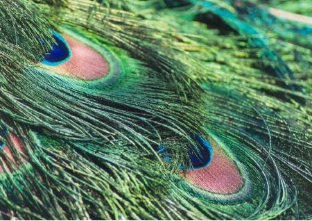 Love that plumage