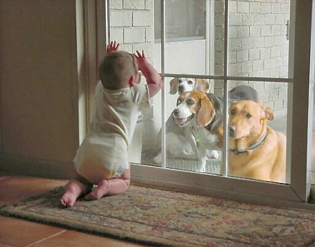 Let Me Out!