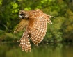 Owl on the prowl