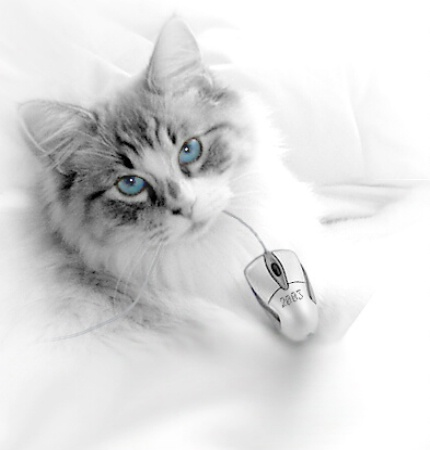 Hi-Tech Mouser
