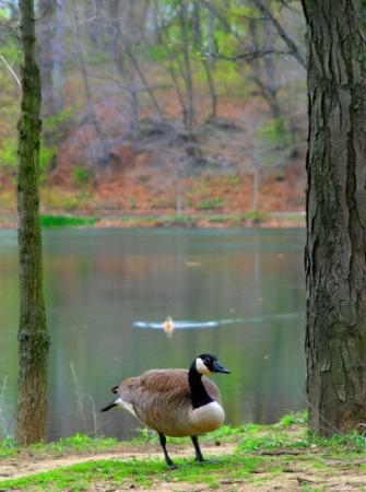 Duck Classified