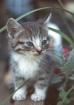 Kitten on Porch