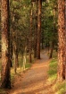 A Lovely Walk