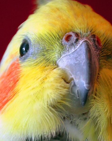 Beak to Cheek