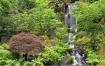 Japanese Garden #...