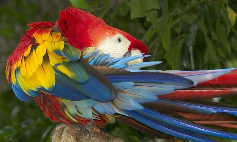 Macaw - ID: 406467 © James E. Nelson
