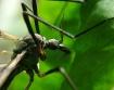Mosquito z